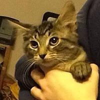 Adopt A Pet :: Lara - Stafford, VA
