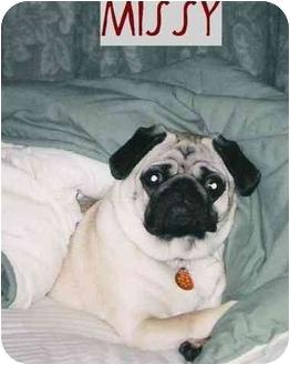 Pug Dog for adoption in Haughton, Louisiana - Missy