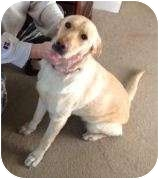 Labrador Retriever Mix Dog for adoption in Huntsville, Alabama - ELLA