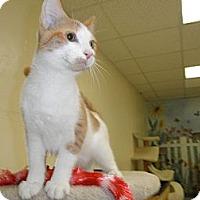 Adopt A Pet :: Royale - Milwaukee, WI