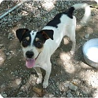 Adopt A Pet :: Wishbone - E Windsor, CT