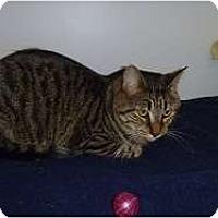 Adopt A Pet :: Toby - Hamburg, NY
