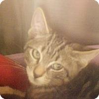 Adopt A Pet :: Ted - Maywood, NJ