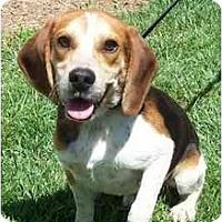 Adopt A Pet :: Captain - Indianapolis, IN