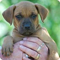 Adopt A Pet :: Patty - Providence, RI
