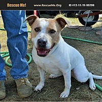 Adopt A Pet :: Roxie - Norco, CA
