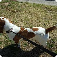 Adopt A Pet :: Peter Pan - Albuquerque, NM