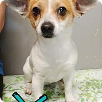Adopt A Pet :: Xavier - Odessa, TX