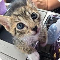 Adopt A Pet :: Dandelion - Wharton, TX