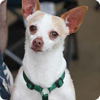 Adopt A Pet :: Howie - South Bend, IN
