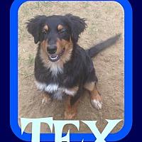 Adopt A Pet :: TEX - Sebec, ME