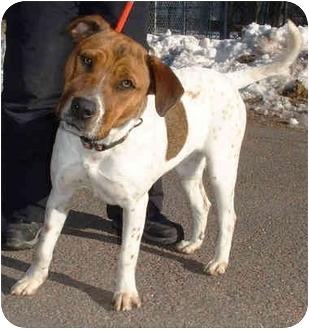 Pit Bull Terrier/Labrador Retriever Mix Dog for adoption in Honesdale, Pennsylvania - Pearl
