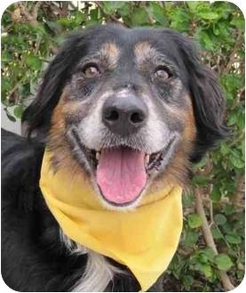 Border Collie Mix Dog for adoption in San Diego, California - Kiara