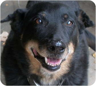 Cattle Dog Mix Dog for adoption in Atlanta, Georgia - Milo