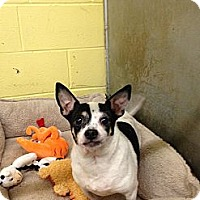 Adopt A Pet :: Penelope - Southbury, CT