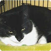 Adopt A Pet :: Winston - Medway, MA