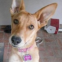 Adopt A Pet :: GISELLE - courtesy post - Marina Del Ray, CA
