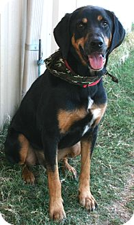 Hound (Unknown Type) Mix Dog for adoption in Pilot Point, Texas - Sergio