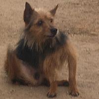 Adopt A Pet :: Zuko - Phoenix, AZ