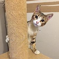 Adopt A Pet :: Pecan - Madisonville, LA