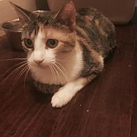 Adopt A Pet :: Skittles - Jacksonville, TX