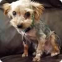 Adopt A Pet :: Peanut - Spring, TX