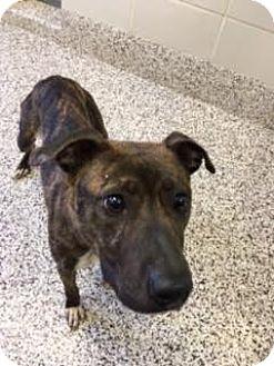 Mixed Breed (Medium) Mix Dog for adoption in Aiken, South Carolina - Robin
