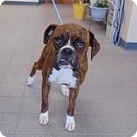 Adopt A Pet :: Robbie - Denver, CO