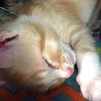 Adopt A Pet :: Gus - Edmonton, AB