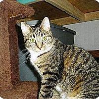Adopt A Pet :: Summer - Cleveland, OH