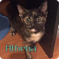 Adopt A Pet :: Athena - Anaheim Hills, CA