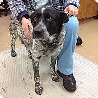 Adopt A Pet :: Pearl - Oak Creek, WI
