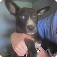 Adopt A Pet :: Mitch (ADOPTED!) - Chicago, IL
