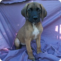 Adopt A Pet :: Juno - Phoenix, AZ