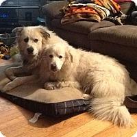 Adopt A Pet :: Cate - Lee, MA