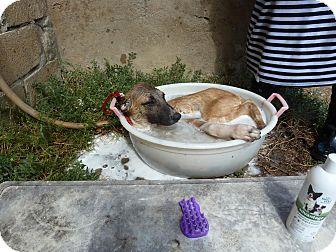 Hound (Unknown Type) Mix Puppy for adoption in Stamford, Connecticut - Buddy