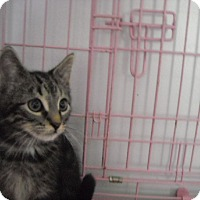 Adopt A Pet :: Logan - Riverside, RI