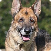 Adopt A Pet :: Schatten - Nashville, TN