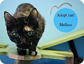 Domestic Shorthair Cat for adoption in West Des Moines, Iowa - Melissa