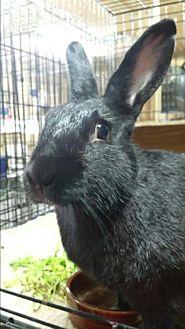 Rex Mix for adoption in Williston, Florida - Shannon