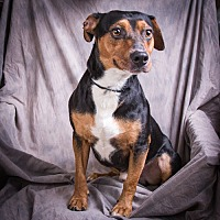 Adopt A Pet :: BOUDREAU - Anna, IL