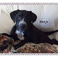 Adopt A Pet :: Beeje - Colmar, PA