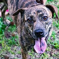Adopt A Pet :: Jazzy - Warner Robins, GA