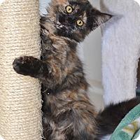 Adopt A Pet :: Sassy Pants - Davis, CA