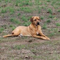 Adopt A Pet :: Amanda - Cedar Bluff, AL