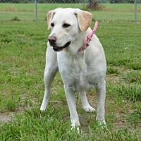 Adopt A Pet :: Lizzy - DuQuoin, IL