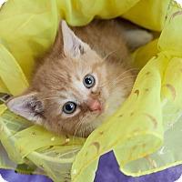 Adopt A Pet :: Reeses Pieces - Muskegon, MI