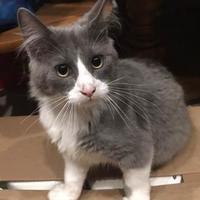 Adopt A Pet :: Viktor - Bethany, OK