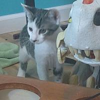Adopt A Pet :: Sparkles - Millersville, MD