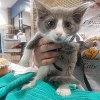 Adopt A Pet :: Flounder - Balto, MD